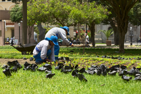 miraflores: LIMA, PERU - FEBRUARY 1, 2012  Unidentified gardeners planting flowers in the park Parque Kennedy in the district of Miraflores on February 1, 2012 in Lima, Peru  The Municipality of Miraflores invests a lot into keeping its public spaces nice and clean f Editorial