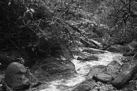 black and white forest: Monochrome image of small brook surrounded by rocks and lush vegetation in cloud forest in Ecuador close to the small town of Rio Verde  Stock Photo