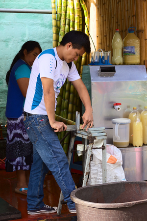 BANOS, ECUADOR - FEBRUARY 26, 2014  Unidentified young man cutting fresh sugar cane, which is either being eaten fresh or squeezed as juice, on February 26, 2014 in Banos, Ecuador  In Banos, there are many stands offering fresh sugar cane,  its juice or c