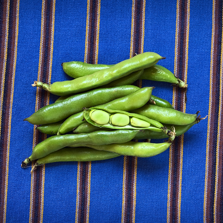 haba: Fresh raw fava beans (lat. Vicia faba, South America: haba), photographed with natural light
