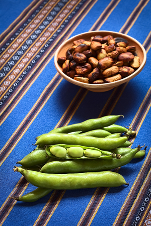 fava: Fresh raw fava beans (lat. Vicia faba, South America: haba) with roasted habas in the back, photographed with natural light (Selective Focus, Focus on the open bean pod)