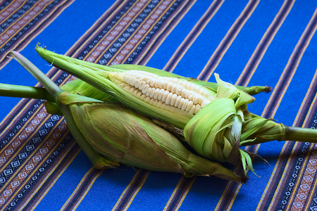 typically english: Cobs of white corn called Choclo (Spanish), in English Peruvian or Cuzco corn, typically found in Peru and Bolivia and used in traditional dishes, such as the Peruvian ceviche (Photographed with natural light) Stock Photo