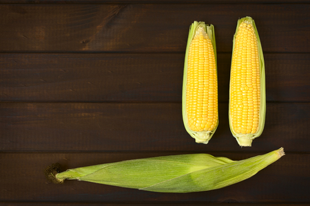 yellow corn: Overhead shot of cobs of sweet corn with husk and two without husk photographed on dark wood with natural light