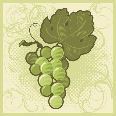 Retro-styled green grape bunch. Vector illustration. Stock Vector - 5961182