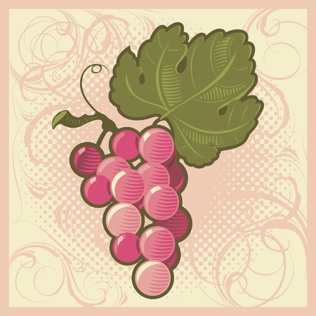 Retro-styled pink grape bunch. Vector illustration. Vector