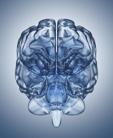 Glass human brain. Clipping path included photo