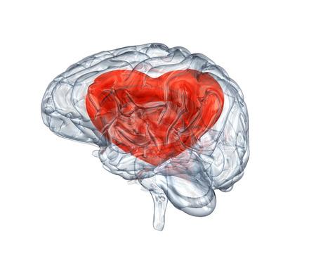 심장 내 유리의 뇌 스톡 콘텐츠