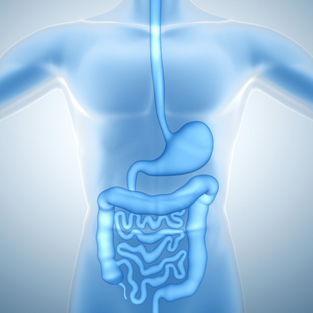人間の消化器系 写真素材