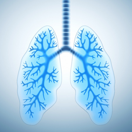 3D illustration of human lungs. Clipping path included