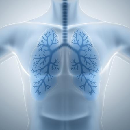 aparato respiratorio: Pulmones limpios y saludables Foto de archivo