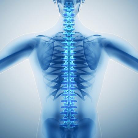 Human backbone 写真素材
