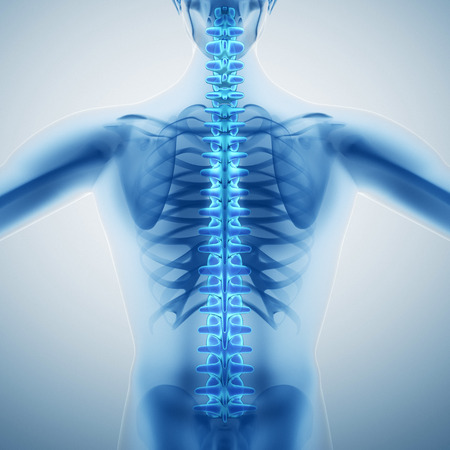 anatomy x ray: Human backbone Stock Photo