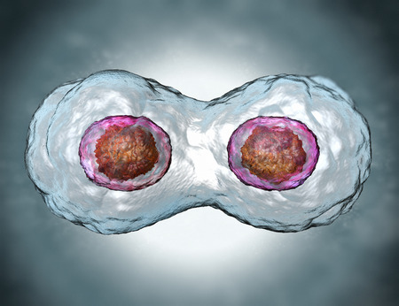 new medicine: Mitosis Stock Photo