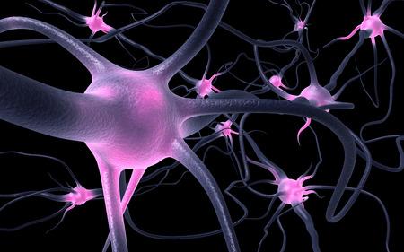 neurons: Neurons Stock Photo