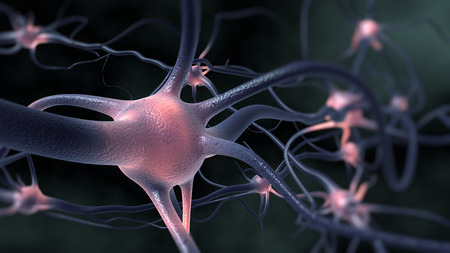 脳の中 写真素材