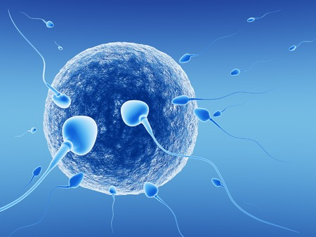 Spermatozoids and human egg