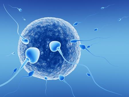 Spermatozoïden en menselijk ei