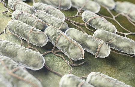 monella: Cultura de las bacterias de Salmonella en una superficie org�nica.