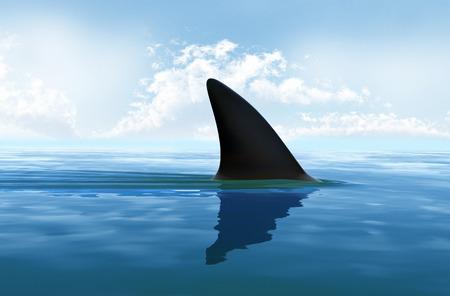 sharks: Shark fin above water Stock Photo
