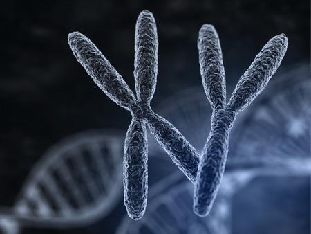 biology: Hombre y mujer los cromosomas con efecto de enfoque macro
