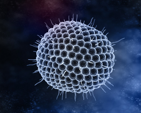 varicella: Varicella zoster virus or varicella-zoster virus (VZV) is one of eight herpesviruses known to infect humans and vertebrates.