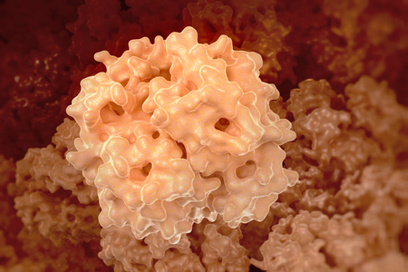 Hemoglobin (human, Hb) protein molecule, chemical structure