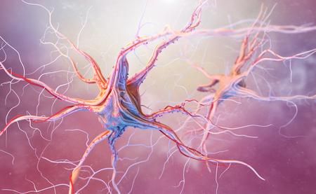 encephalon: Neurons and nervous system. 3d render of nerve cells