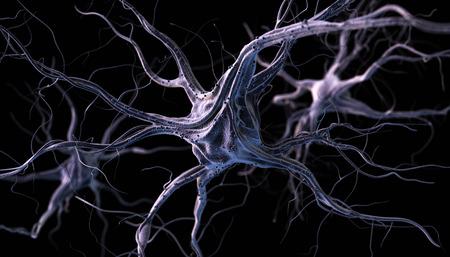 sensory receptor: Realistic brain neurons. 3d illustration.