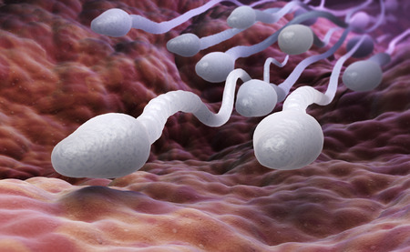 Male sperm cells. 3D illustration 版權商用圖片 - 72390225