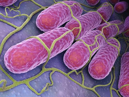 Culture of Salmonella bacteria.3 D illustration Archivio Fotografico