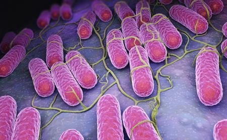 살모넬라 박테리아의 문화. 3D 일러스트 레이션