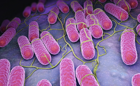 Culture of Salmonella bacteria. 3D illustration