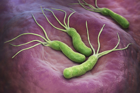 Helicobacter Pylori is a Gram-negative, microaerophilic bacterium found in the stomach. 3D illustration Stock Photo