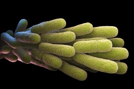 Legionella Pneumophila Bacteria. 3D illustration