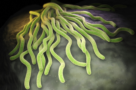 borreliosis: Colony of Borrelia burgdorferi bacteria, the bacterial agent of Lyme disease transmitted by ticks. 3D illustration