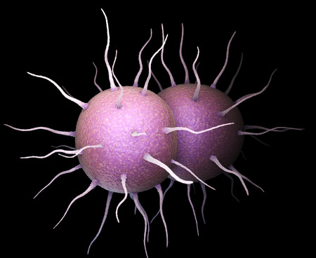 Neisseria gonorrhoeae, the bacterium responsible for the sexually transmitted infection Gonorrhea. 3D illustration