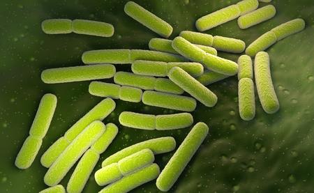 E. coli. Escherichia coli bacteria cells. 3D illustration
