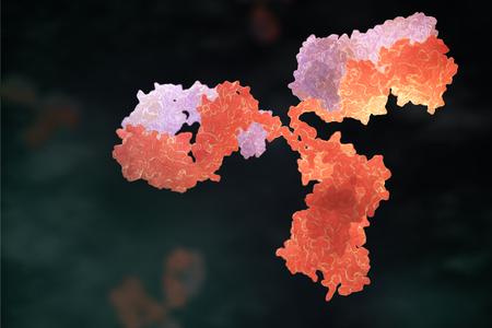 Anticuerpo humano (inmunoglobulina). Ilustración 3D