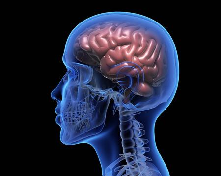 검정 배경 위에 인간의 두뇌입니다. 3D 일러스트 레이션 스톡 콘텐츠