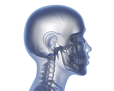 Human head with no brain. 3D illustration