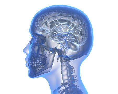 Human brain over white background. 3D illustration