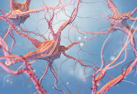 Neurons and nervous system. 3d render of nerve cells. 3D illustration Stock Illustration - 110771807