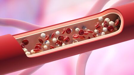 Red and white blood cells in the vein. Leukocyte high level. 3D illustration Stok Fotoğraf