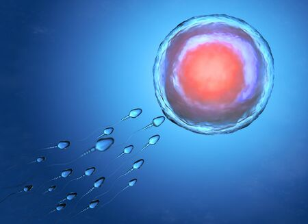 Illustration of sperm and egg cell. 3D illustration