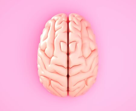 Pink brain on the color background. 3D illustration