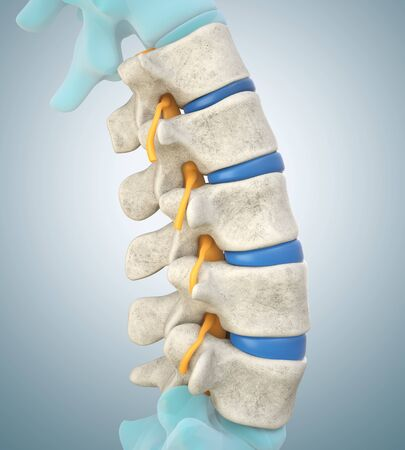 Human lumbar spine model demonstrating normal discs. 3D illustration Stock Photo