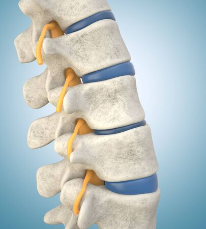 Human lumbar spine model demonstrating thinned disc. 3D illustration