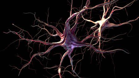 3d rendered illustration of nerve cells Stock Photo
