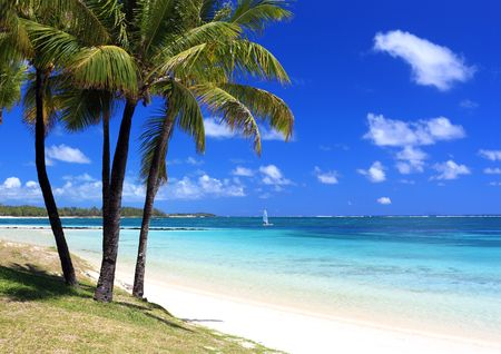 summertime: wonderful beach with palm trees in tropical island Stock Photo