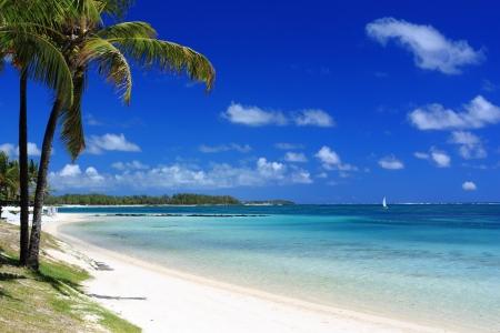 mauritius: tropisch strand met palm boom